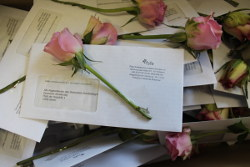 Rose and letter ready to be delivered to the German Paliament